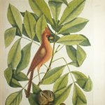 Drawing of a red bird sitting on a branch of leaves.